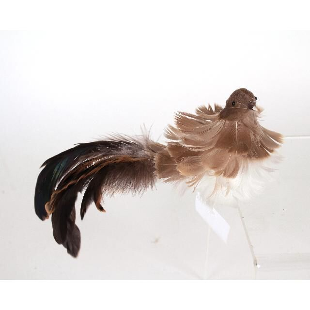 BI012 natural colored curly bird with long tail clip on bird ornament