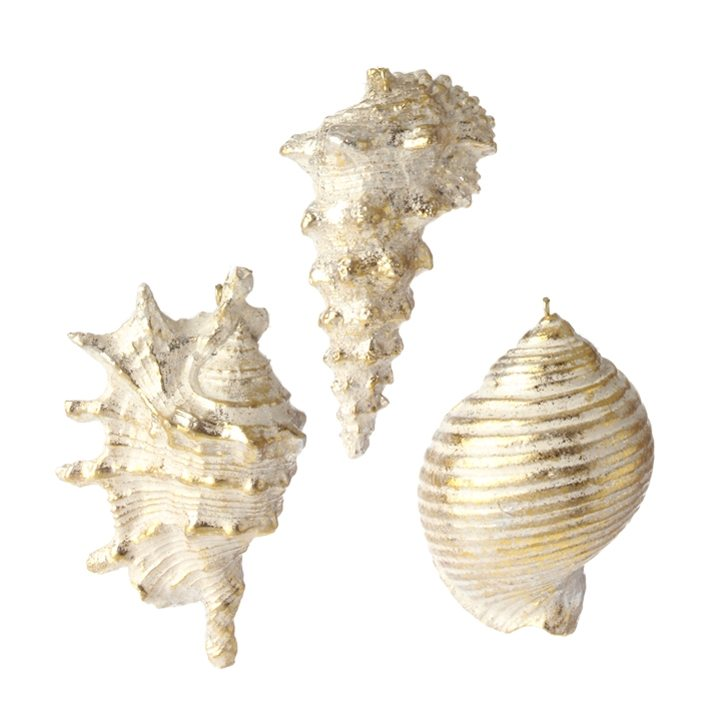 3616396 sea shell ornaments