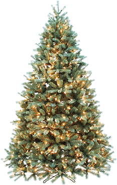 Christmas Trees at St. Nicks